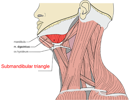 Submandibular Gland | ENT Doctor Cape Town